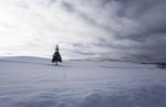 雪原のクリスマスツリー.jpg