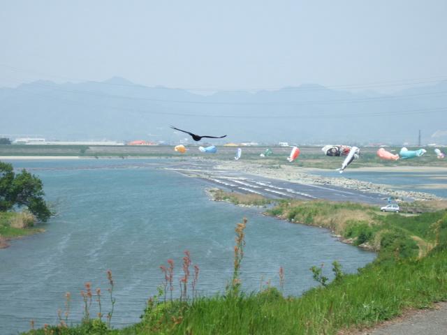 吉野川南岸コース 第十堰 .JPG