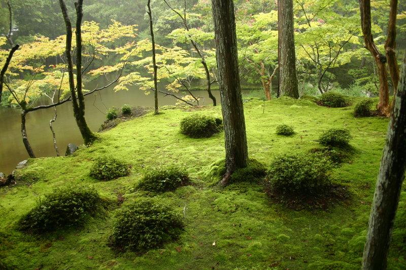 西芳寺 庭園.jpg