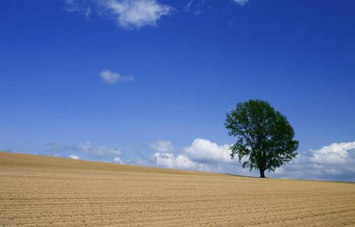 哲学の木.jpg