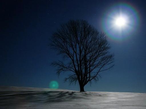 哲学の木 冬編.jpg