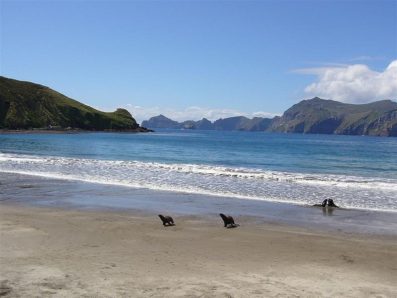 Campbell Island.jpg