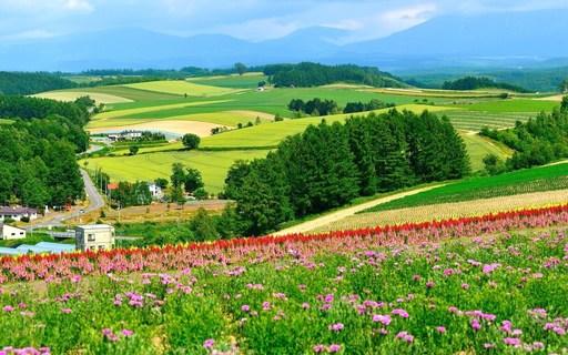 パッチワークの丘 美瑛 北海道.jpg