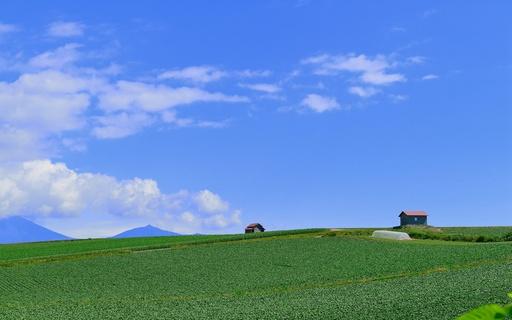 丘の上の赤い屋根の家 美瑛 北海道.jpg