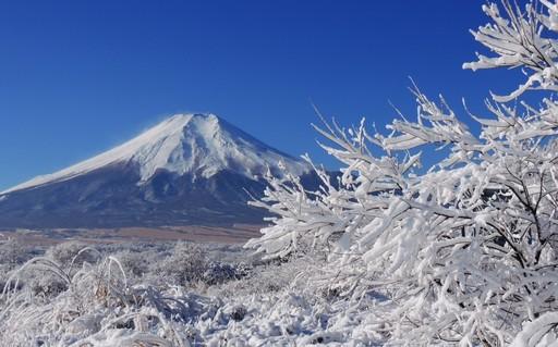 冬景色 富士山と樹氷 忍野 山梨.jpg