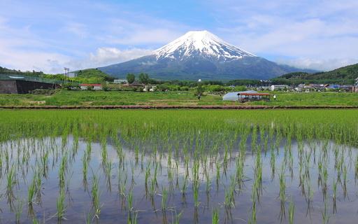 初夏の富士山 山梨.jpg