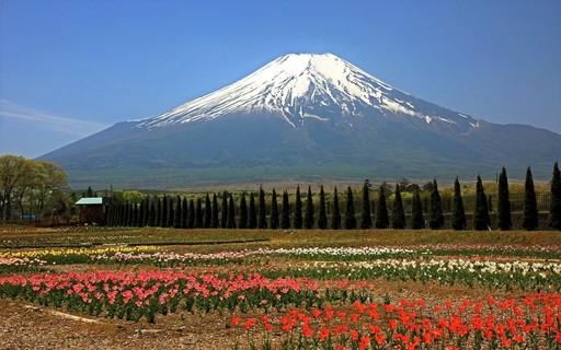 富士山 花の都公園 山梨.jpg
