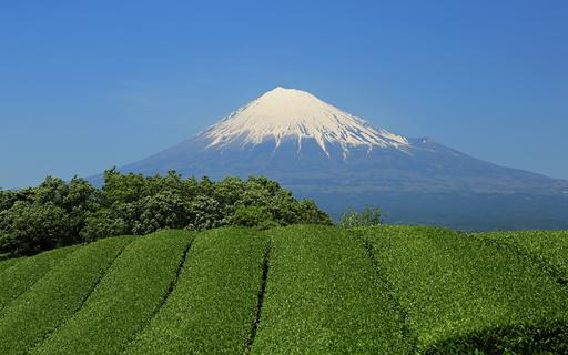 富士山と茶畑 富士宮 静岡.jpg