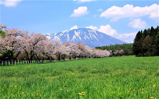 春の岩手山 小岩井農場 岩手 .jpg