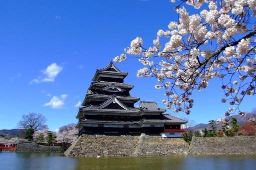松本城 桜 長野.jpg