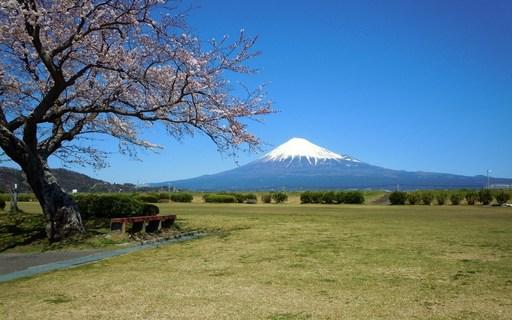 桜と富士山 富士川 静岡.jpg