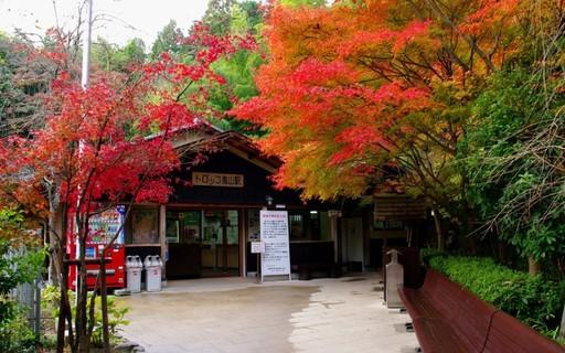 紅葉 トロッコ嵐山駅 京都.jpg
