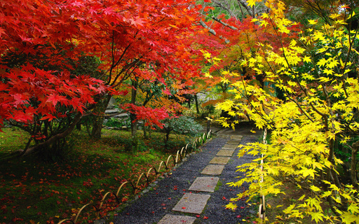 紅葉 檀林寺 飛び石の小径 嵯峨野 京都 .jpg