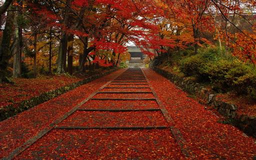 紅葉 毘沙門堂 京都.jpg