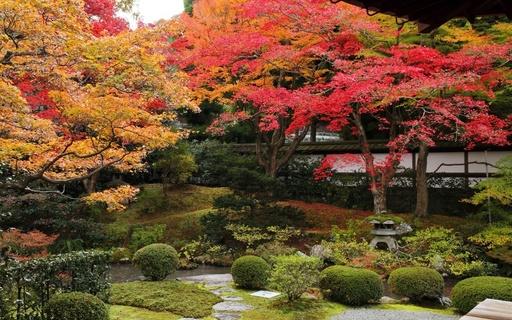 紅葉 泉涌寺(せんにゅうじ) 京都.jpg