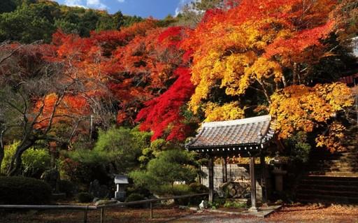 紅葉 金蔵寺(こんぞうじ)京都(2).jpg
