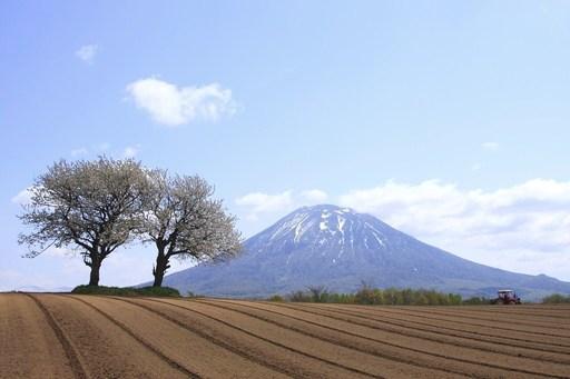 羊蹄山と桜 北海道.jpg