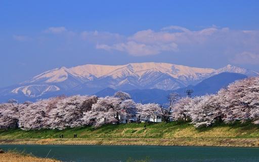 蔵王連峰と一目千本桜 宮城.jpg