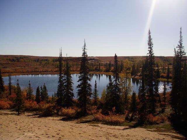 Wood Buffalo National Park 1.jpg